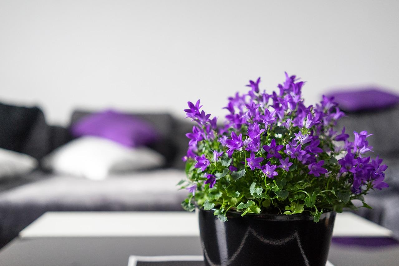 Kwiaty w aranżacji wnętrz